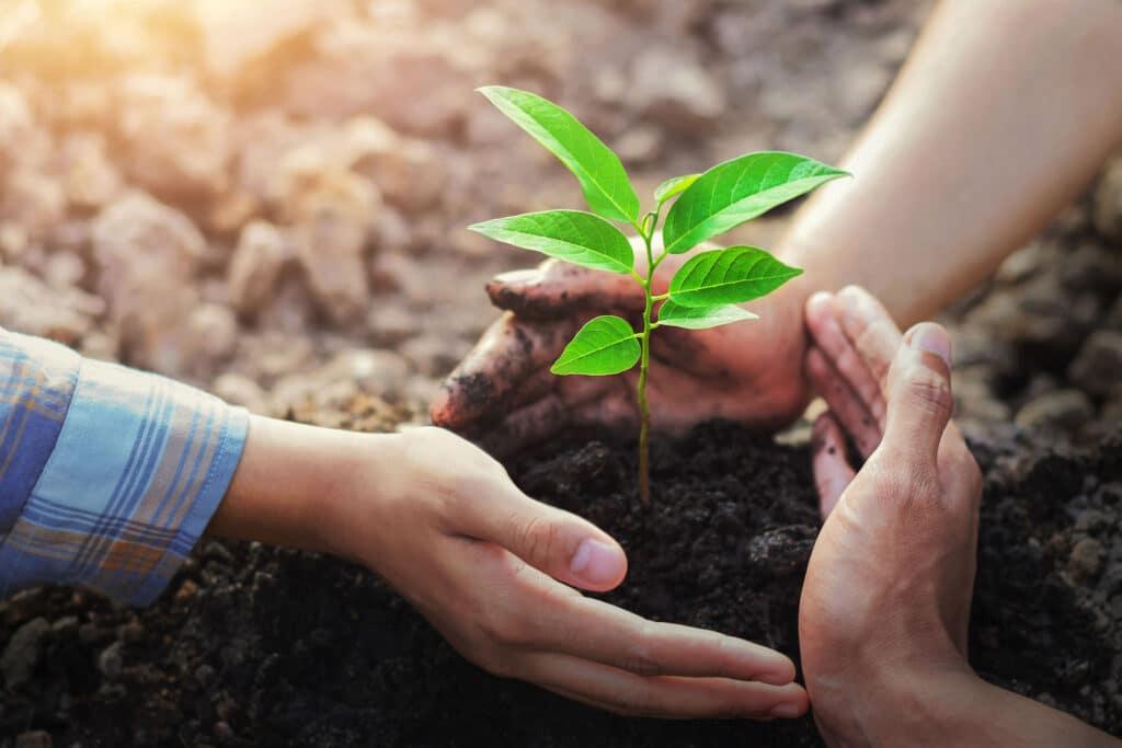 three-hand protection tree planting