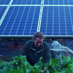 Blog Featured Image for Farmers swap crops for energy